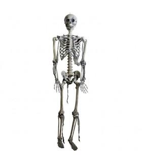 Esqueleto articulado, tamaño natural