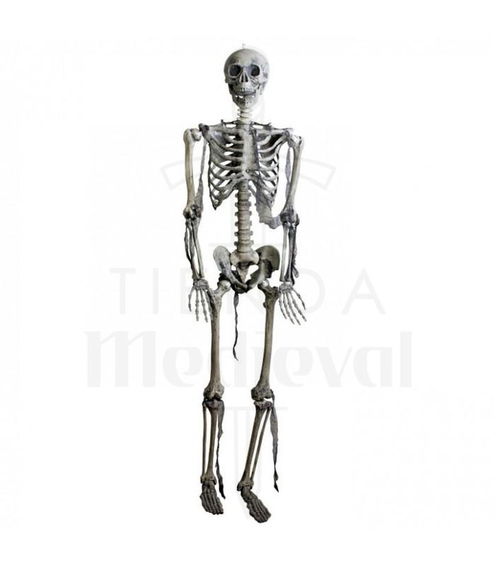 Esqueleto articulado, tamaño natural - Tienda Medieval